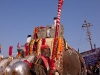Celebration of Pos Sud Purnima at Ambaji, believed to be the Birthday of the god Mata Arasuri Ambaji.