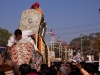 Elephant carring the idol of Ambaji  during the celebration of Pos Sud Purnima at Ambaji.