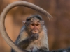 And one more monkeys shot Badami.