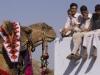 The winning camel holding his head high, Bundi.