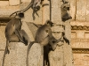 Langurs on the Krishna Temple, Hampi.
