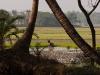 Near Jessore