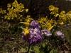 Wildflowers, Langtang Valley
