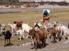 Hunder, Nubra Valley