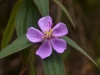 Wild flower, Phawngpui