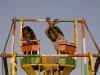 Kids enjoying a hand powered Ferris Wheel at the Pushkar Fair.