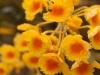 Orchid, Reiek