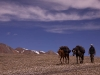 Horseman crossing the Shibuk La (3rd pass of the trek)