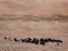 Nomadic herder of Yaks, Kartse La