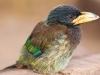Bird, Shiyong
