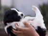 New puppy, Phejin\'s house, Shiyong, Nagaland
