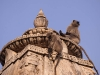 Langurs on a temple at Ekling