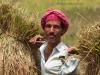 Farmer, Pilak