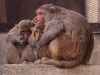 Monkeys tring to stay warm in the early morning.