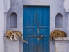 Dogs lounging in front of a doorway in Bundi.