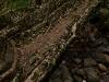 Small root bridge near Nongriat