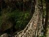 Double-decker root bridge Nongriat.