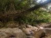 Root bridge, near Nongriat
