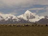 Himalayan peaks.