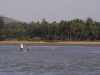Fishing in a lagoon, near Gokarna.