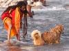 Sadhu washing his dog, Kumbh Mela, Haridwar
