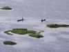 Loktak Lake, Manipur