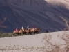 Tourists riding camels in Hunder, Nubra Valley