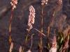 Wildflowers at my camp above Parkachik Glacier