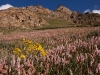 Field of wildflowers while climbing to my 3rd camp en route to Nun base camp