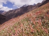 View of wildflowers while descending to Tongol