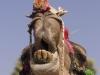 Pushkar.