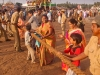 Positioning the chariots for the return procession, Rath Yatra, Puri