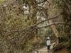 Porter in rhododendron forest, Goecha La trek.