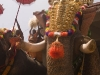 Ceremonial elephants, temple festival in Wadakkancheri, Thrissur District.