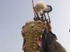 Ceremonial elephant, temple festival in Wadakkancheri, Thrissur District.
