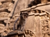 Langur on a temple at Ekling