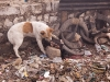 Dog fending for the left overs, Ukhrul