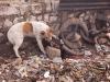 Dog fending for the left overs, Ukhrul